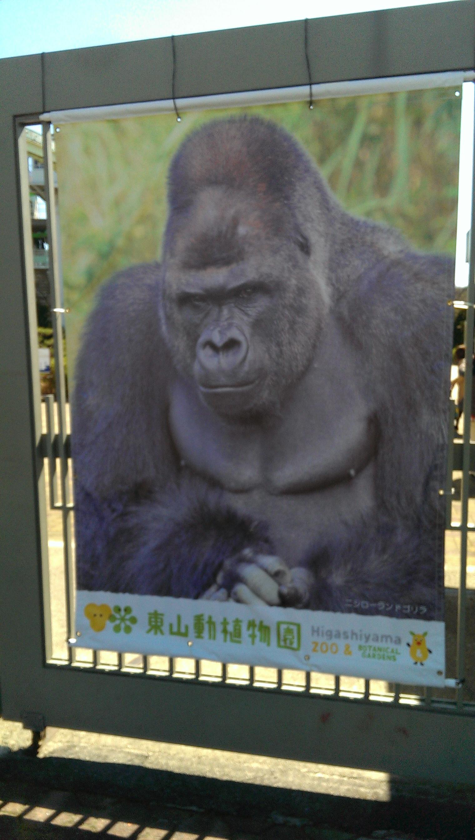 晴天!東山動物園
